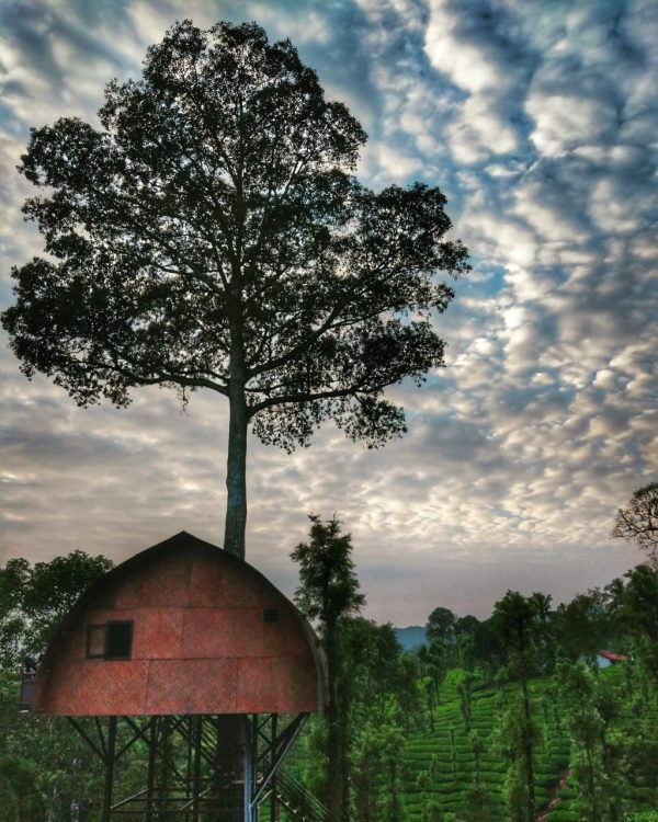 tree house at priyadarshini tea environs