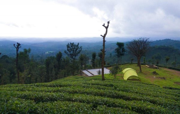 priyadarshini tent camping in the middle of tea garden