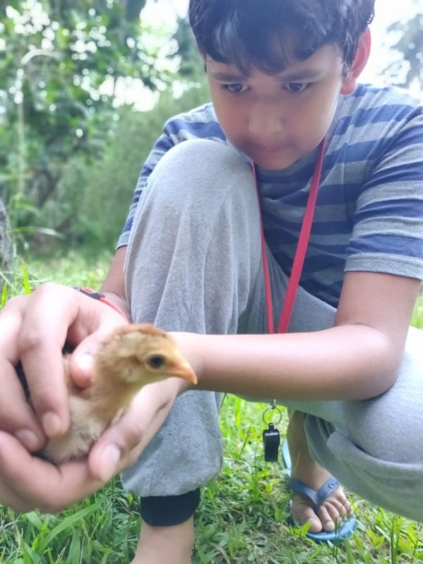 Ardavan playing with small chicken - Adventure-Summer-camp-for-kids